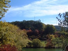Mt Lofty botanic gardens in autumn